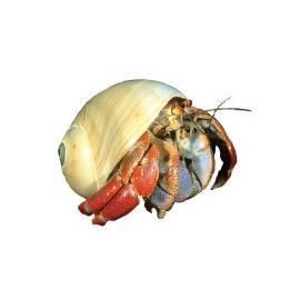 Invertebrados y crustáceos