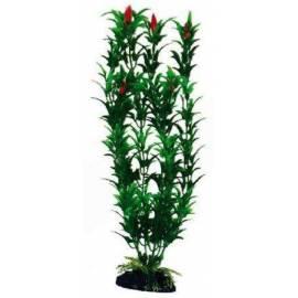 Egeria Flowers Bicolour