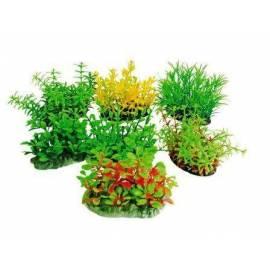 Tropical Plants 8cm