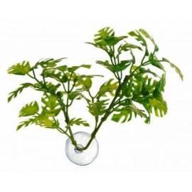 Zoomed Betta Plants Window Leaf