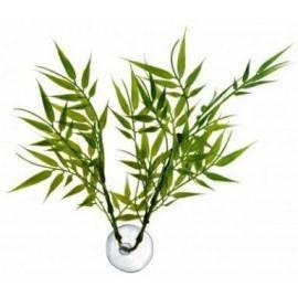Zoomed Betta Plants Bamboo