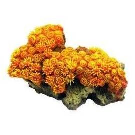 Arquizoo Decoración Coral 8632