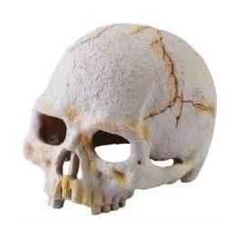 Exo Terra Cráneo de Primate
