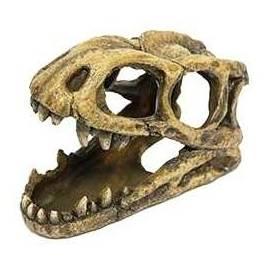 ICA Cabeza Fósil Tiranosaurio Rex